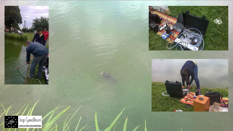 Measurements of cyanobacteria in Hotinje pond