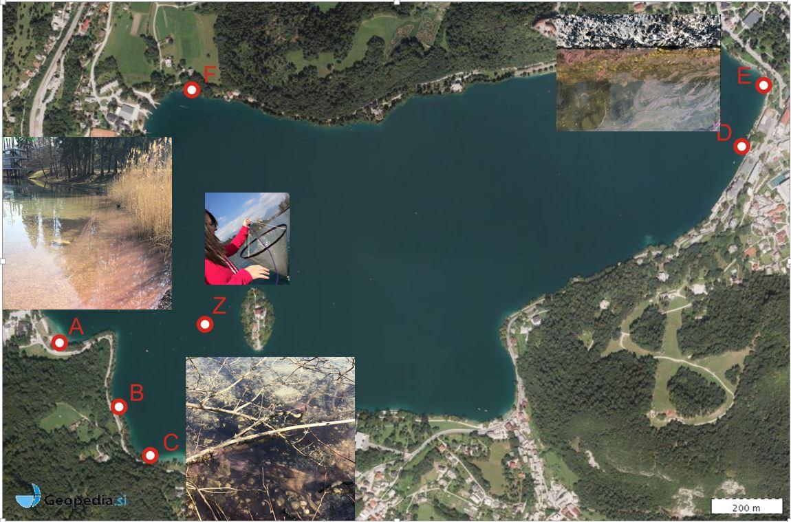 Zgodnji spomladanski monitoring na Blejskem jezeru
